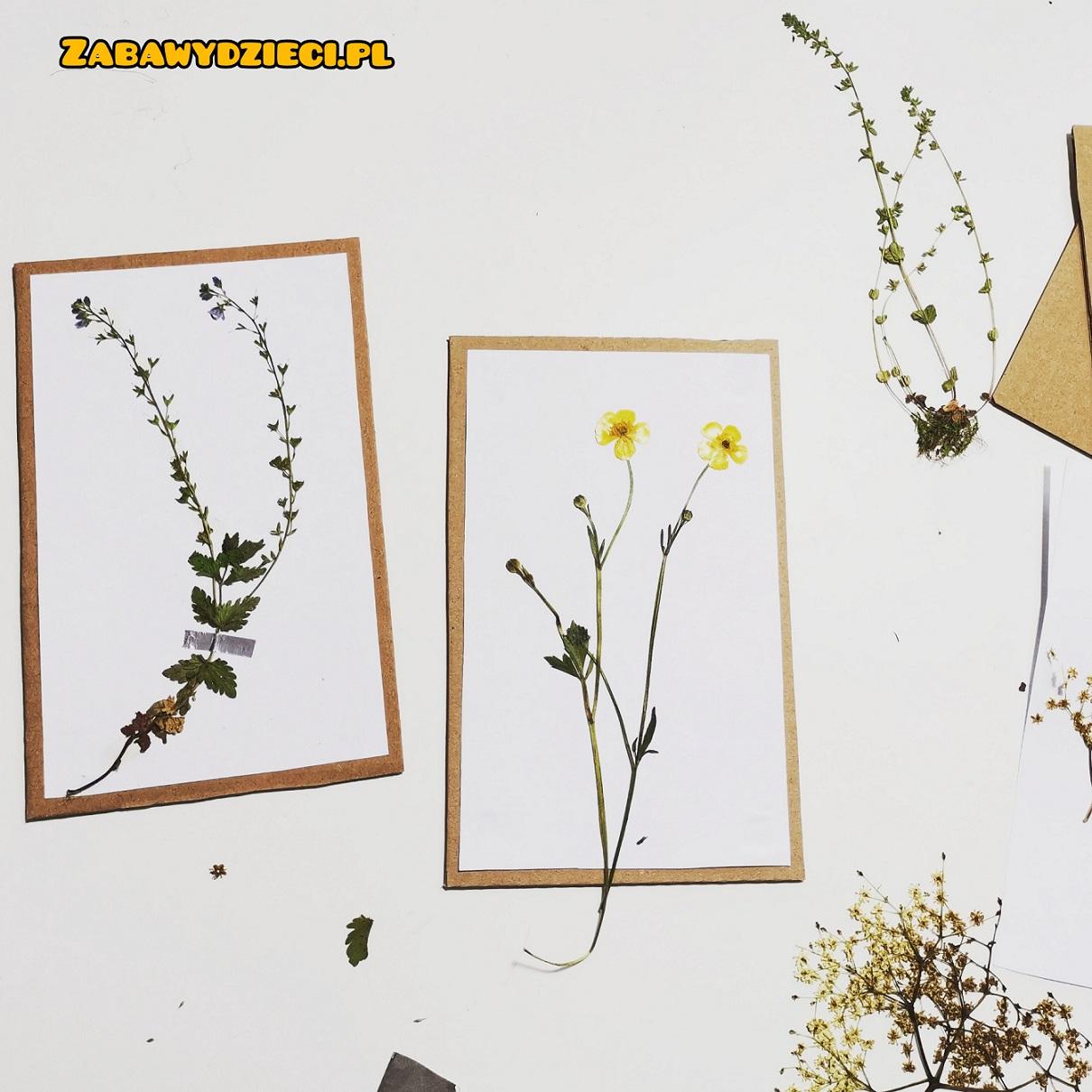 identyfikacja roślin